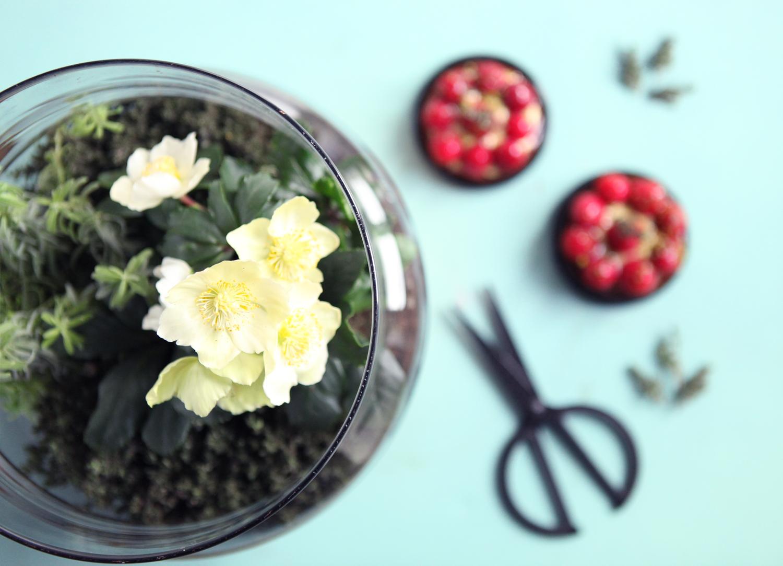 Don't mess with the rabbit - IKEA - COP21 - Terrarium tartelettes fraises thym4