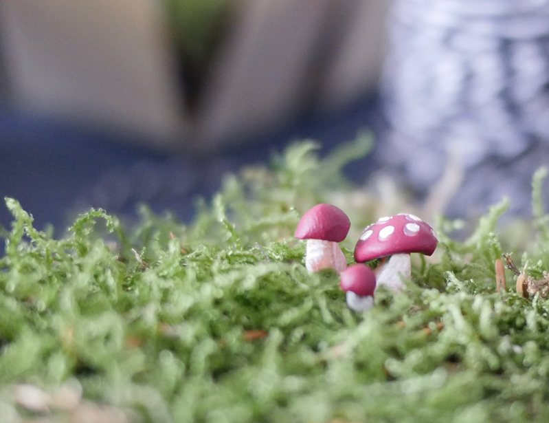 Don't mess with the rabbit - DIY terrarium jardin de fee Truffaut - les champignons cuits1bis
