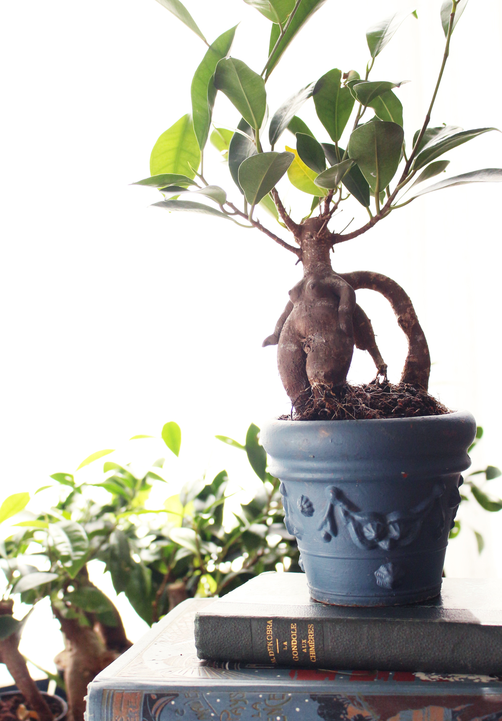 don't mess with the rabbit - mandrake diy - tuto mandragore harry potter
